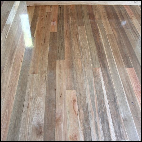 Spotted Gum Timber Flooring Spotted Gum Hardwood Flooring